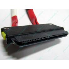 SATA-кабель для корзины HDD HP 451782-001 459190-001 для HP ML310 G5 (Кемерово)